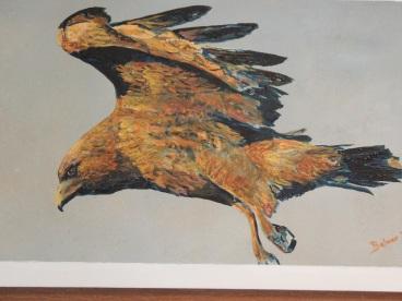 sally's hawk 2